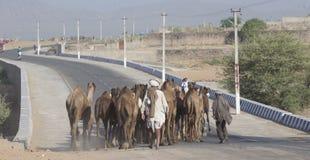 Caminhada do camelo na estrada imagem de stock royalty free