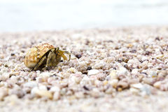 Caminhada do caranguejo do eremita um longo a praia Imagem de Stock