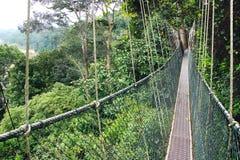 Caminhada do dossel. Malásia Foto de Stock