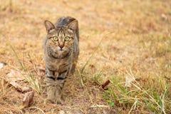 caminhada do gatinho no jardim Fotografia de Stock Royalty Free