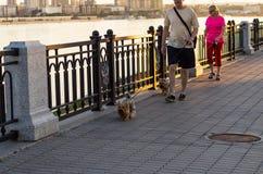 Caminhada do homem e da mulher com cães Imagem de Stock