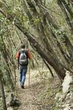Caminhada do homem na natureza e na natureza fotografia de stock