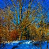 Caminhada do inverno fotos de stock royalty free