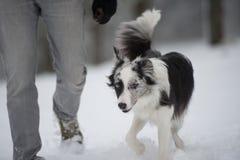 Caminhada do inverno com cão Imagem de Stock