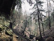 Caminhada do inverno na floresta foto de stock royalty free