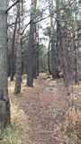 Caminhada do inverno nas madeiras Imagem de Stock