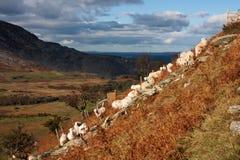 Caminhada do outono Imagem de Stock Royalty Free