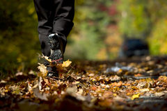Caminhada do outono Fotografia de Stock Royalty Free