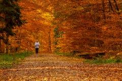 Caminhada do outono na floresta Imagens de Stock Royalty Free
