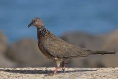 Caminhada do pássaro Fotos de Stock Royalty Free