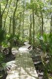 Caminhada do pântano Imagens de Stock
