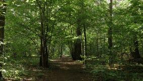 Caminhada do POV através do trajeto de floresta video estoque