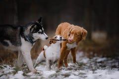 Caminhada dos cães no parque no inverno Fotos de Stock Royalty Free