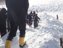 Caminhada dos pinguins no inverno foto de stock royalty free