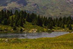 Caminhada em Alp Flix Fotografia de Stock