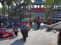 Caminhada em elefantes no parque Fotos de Stock Royalty Free