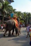 Caminhada em elefantes no parque tropical Fotografia de Stock