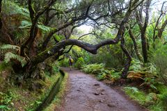 Caminhada em Madeira Imagens de Stock