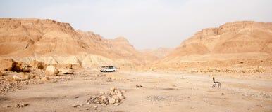 Caminhada em um deserto imagens de stock royalty free