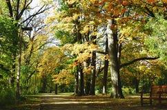 Caminhada em um parque Fotografia de Stock Royalty Free