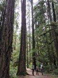 Caminhada em uma floresta úmida Fotografia de Stock Royalty Free
