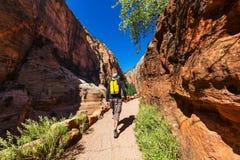 Caminhada em Zion Imagem de Stock Royalty Free