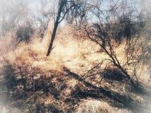 Caminhada entre o amanhecer das árvores Foto de Stock