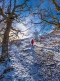 Caminhada invernal bonita na floresta do carvalho acima da vila de Killin, Sco fotografia de stock
