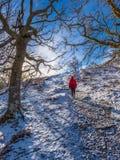 Caminhada invernal surpreendente na floresta do carvalho acima da vila de Killin, Scott imagens de stock