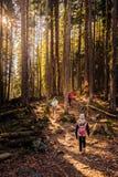 Caminhada na floresta imagens de stock