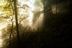 Caminhada na floresta Fotos de Stock Royalty Free