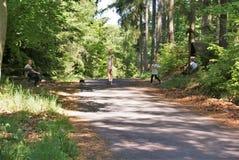 Caminhada na floresta Imagens de Stock Royalty Free