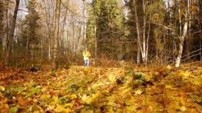 Caminhada na floresta do outono filme