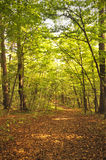 Caminhada na floresta do outono Foto de Stock