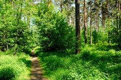 Caminhada na floresta maravilhosa Fotos de Stock