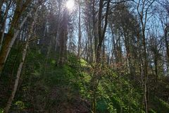 Caminhada na garganta do gauchach do rio na Floresta Negra em Alemanha fotos de stock royalty free