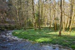 Caminhada na garganta do gauchach do rio na Floresta Negra em Alemanha fotografia de stock royalty free
