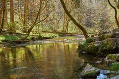 Caminhada na garganta do gauchach do rio na Floresta Negra em Alemanha fotos de stock
