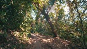 Caminhada na selva tropical filme