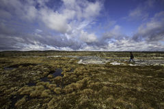 Caminhada na tundra foto de stock royalty free
