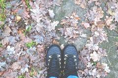 Caminhada nas caminhadas do outono da floresta Fotografia de Stock