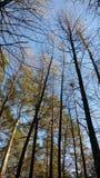 Caminhada nas madeiras Foto de Stock