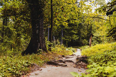 Caminhada nas madeiras Fotografia de Stock Royalty Free