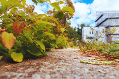 Caminhada nas madeiras Imagens de Stock Royalty Free