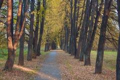 Caminhada nas madeiras Fotos de Stock