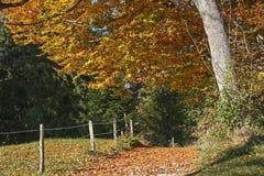 Caminhada no outono Fotos de Stock Royalty Free