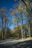 Caminhada no parque Imagem de Stock