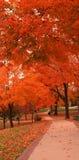 Caminhada no parque Fotos de Stock Royalty Free
