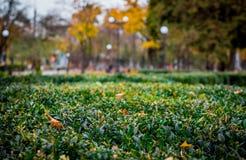 Caminhada no parque do outono Fotografia de Stock