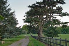 Caminhada no parque fotografia de stock royalty free